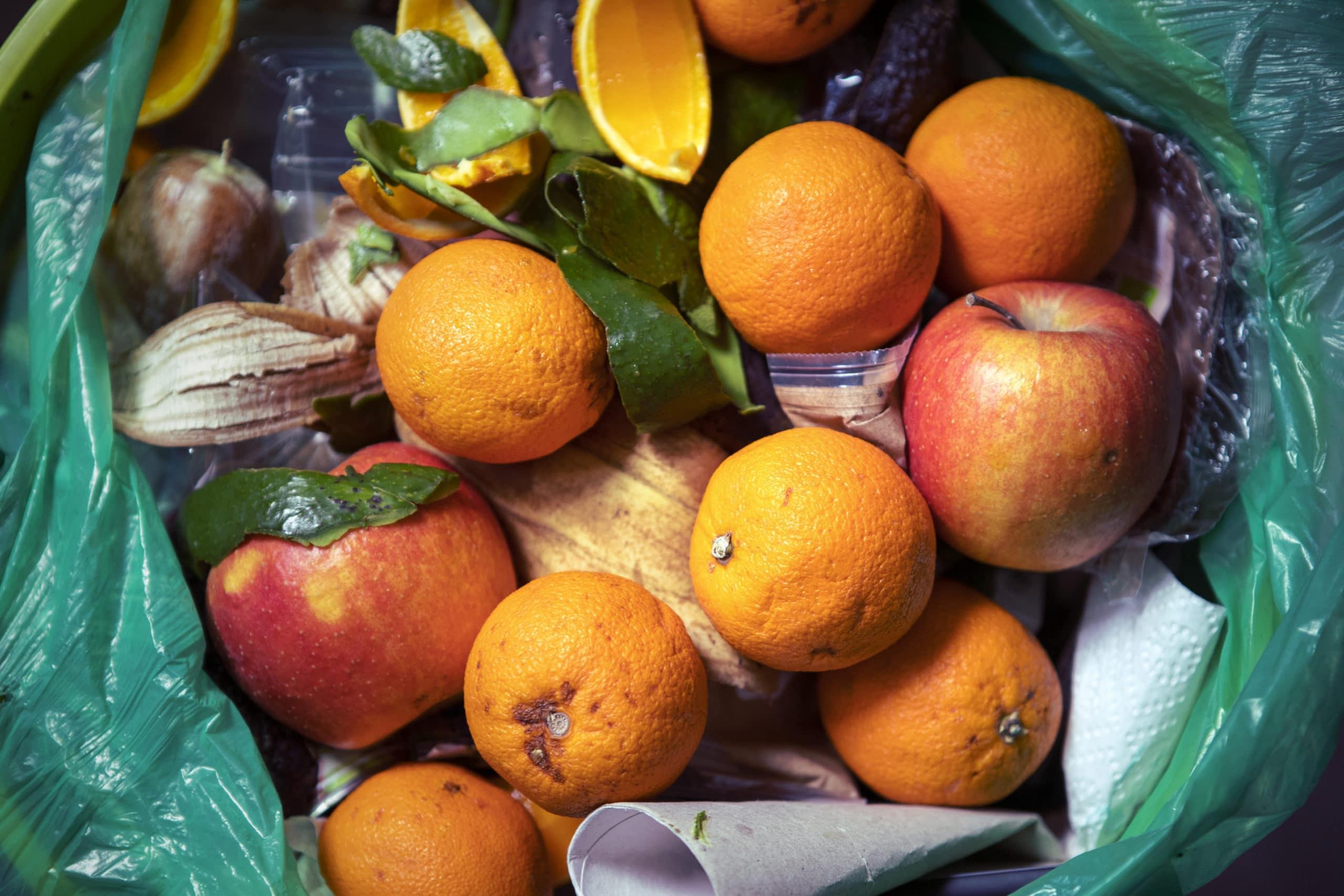 Reste von halb verfaulten Lebensmitteln und andere Abfälle im Papierkorb: Verfaulte Orangen und Äpfel.