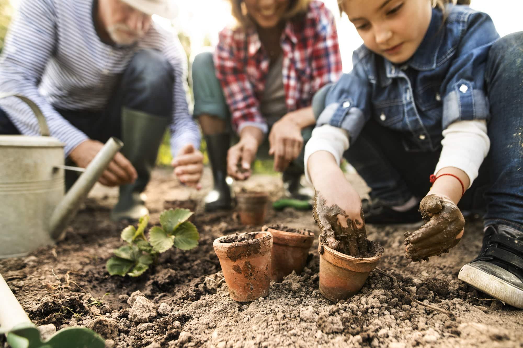 Ein Kind ist mit seinen Eltern im Garten und pflanzt etwas ein.