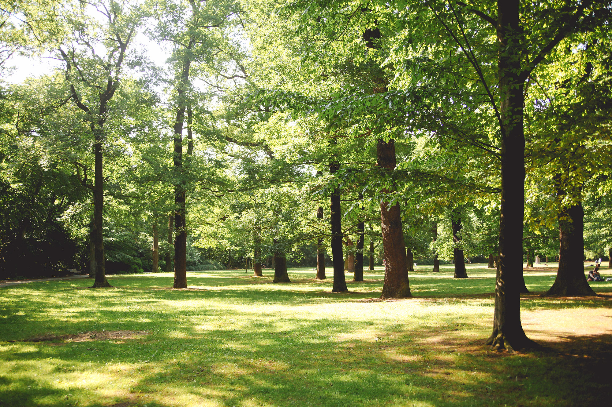 Wie Bäume gegen Feinstaub helfen können?