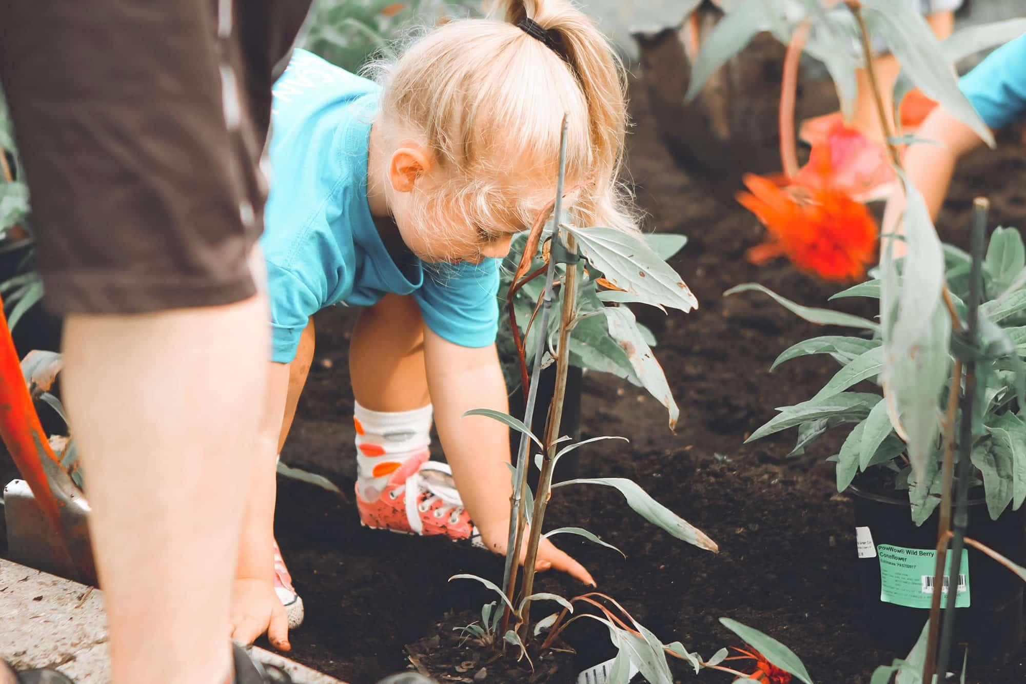 Ein Kind hilft den Eltern beim eingraben einer Pflanze