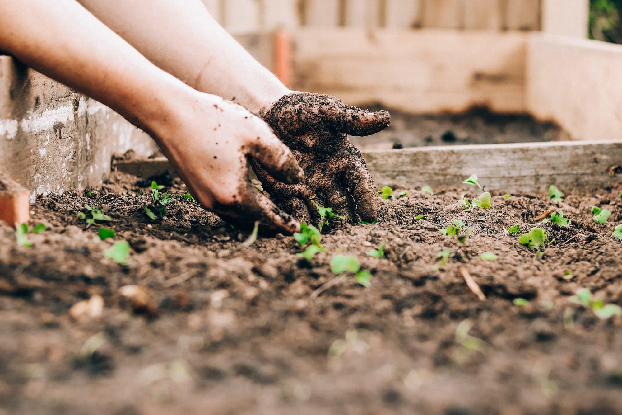 Zwei Hände sind in einem selbstgebauten Blumenbeet und die Pflanzen fangen langsam an zu wachsen